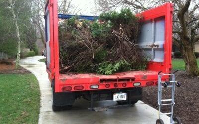 Tree Brush Disposal Indianapolis