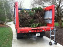 Brush Clean Up in Indianapolis