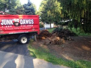 Tree Branch Removal Indianapolis