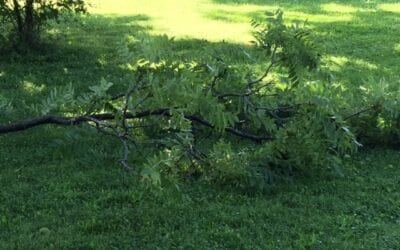 Storm Cleanup Indianapolis