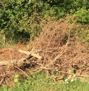 Yard Waste Removal Indianapolis