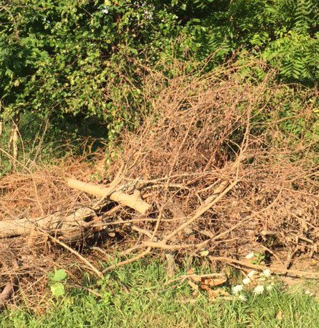 before and after picture of yard waste removal Indianapolis