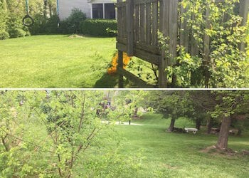 Wooden Swing Set Removal Indianapolis