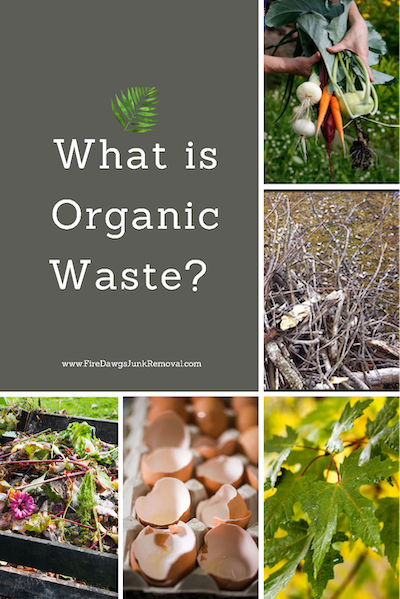 picture showing What is Organic Waste